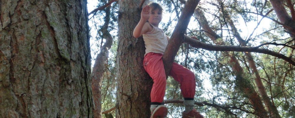 sitting on the tree